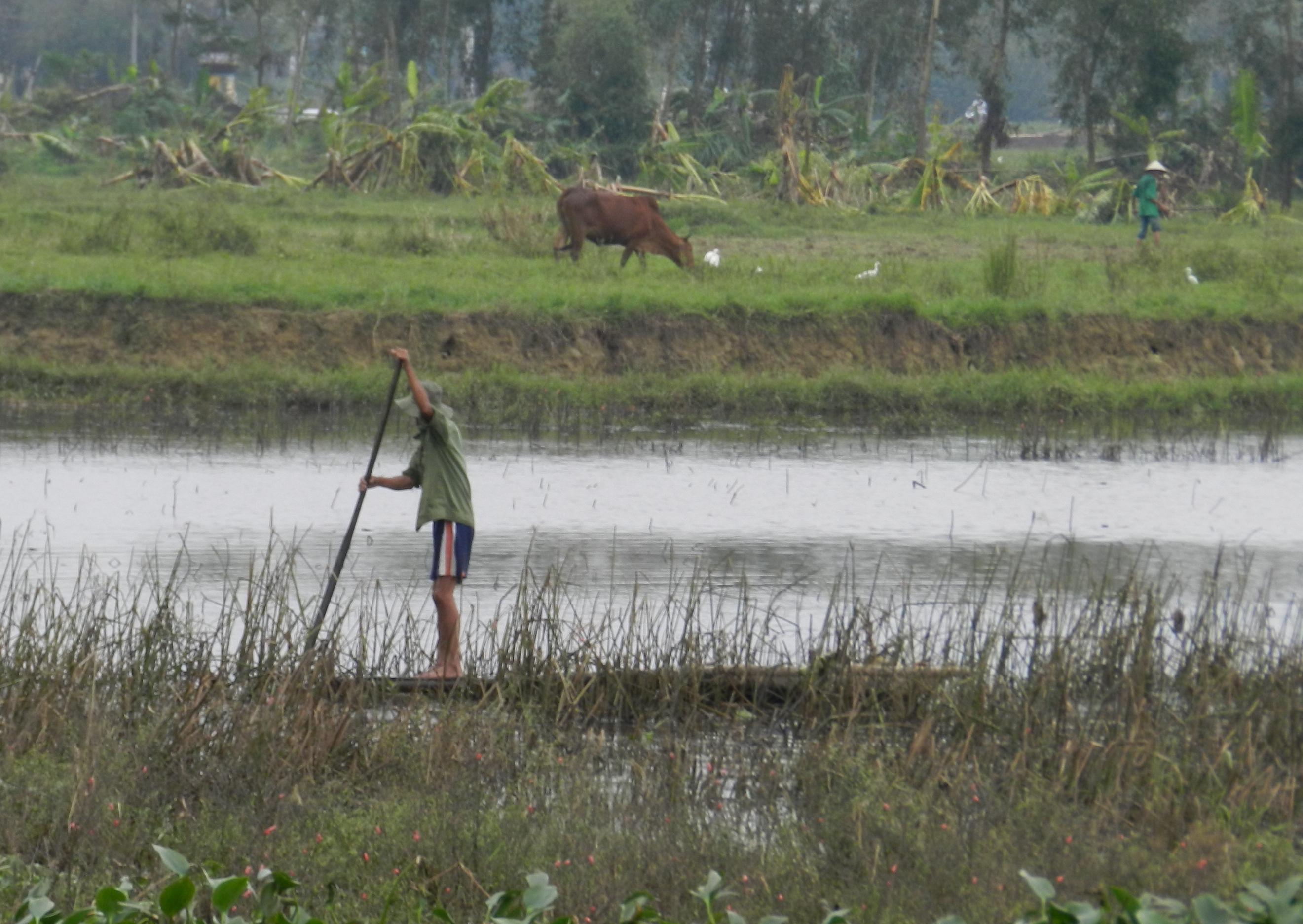 regione da nang - agricoltura